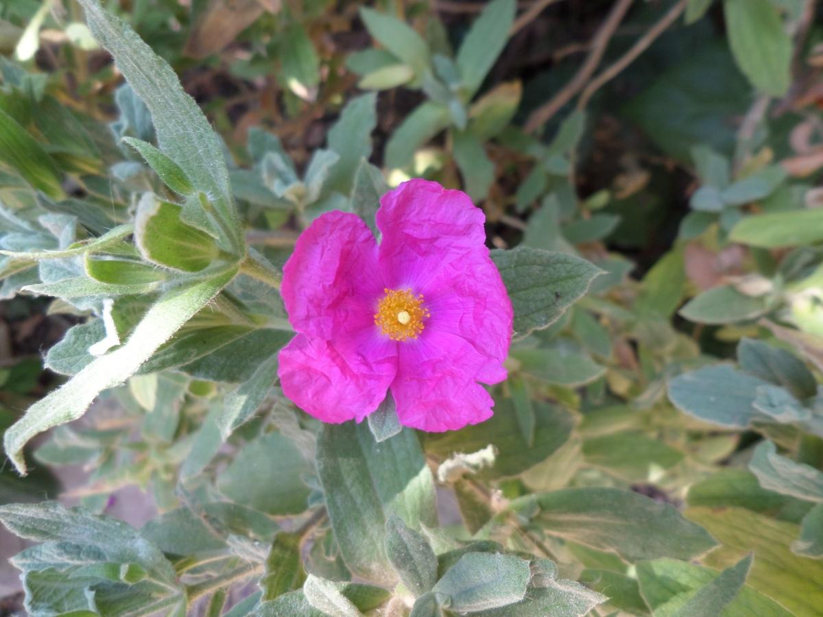 Flora del Parc de les Aigües (8): Arbustos. 1
